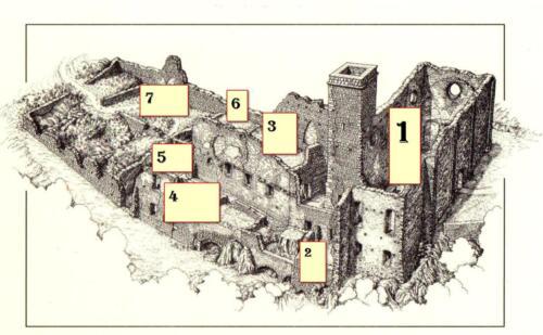 Olivetani Fig. 1