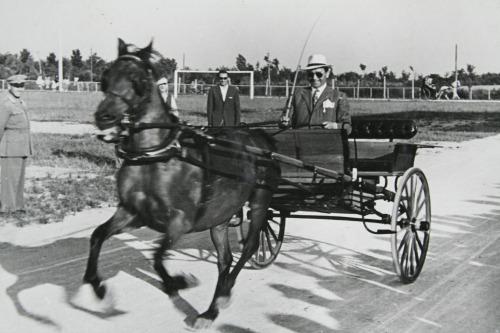 21 - Abano Terme, Concorso Ippico del 4 luglio 1954